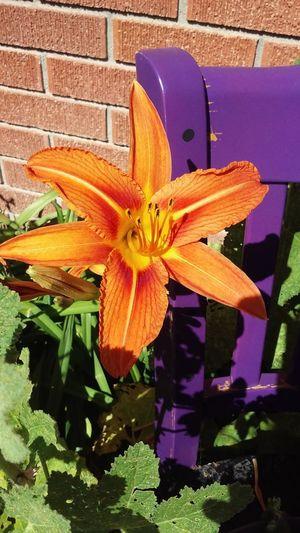 Flower Photography Takenbyme Takingpicsonphone Njcfamilyliteracyprogram In The Yard Beautiful ♥ Love To Take Photos ❤
