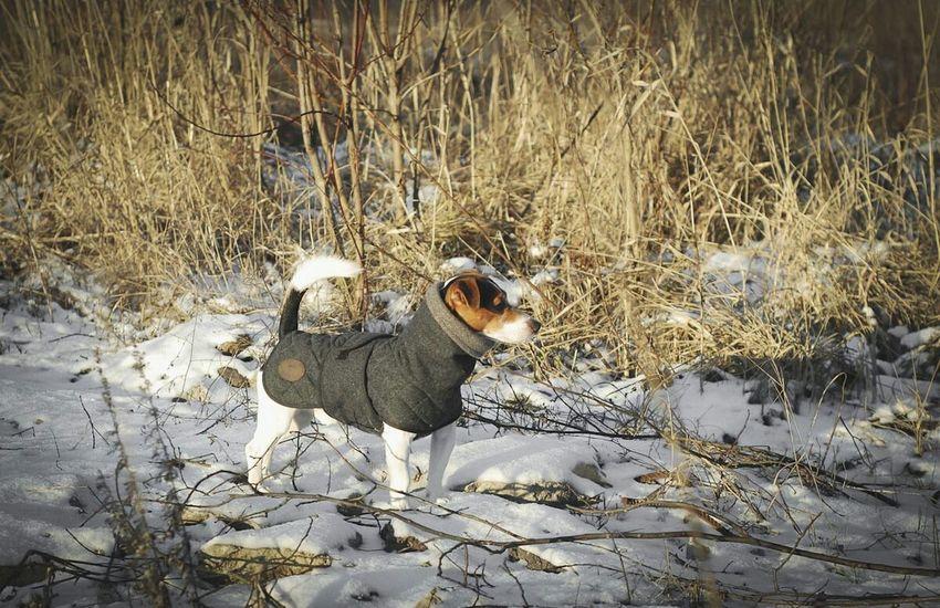 Dogstagram Hunter Bravehound Jackrussell Jrt Dog Wintertime