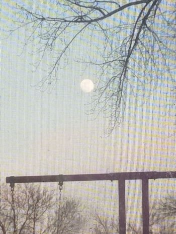 Early evening. No People Nature Tree Sky Moon
