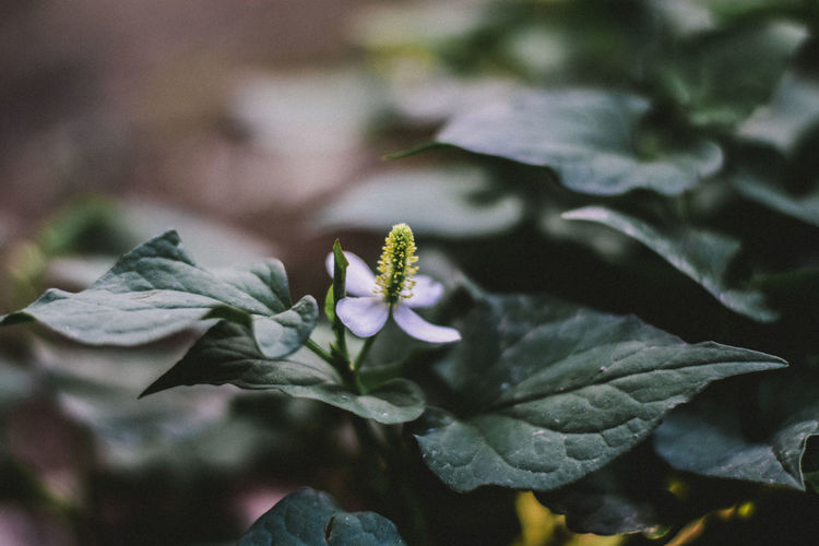 Flower Flower Growth Plant Flower Flowering Plant Beauty In Nature Plant Part Leaf Close-up Vulnerability  Fragility Freshness Petal No People Nature Focus On Foreground Day Green Color Flower Head Selective Focus Inflorescence Outdoors Pollen Purple