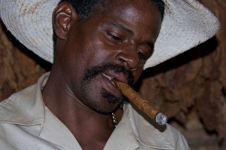 Cuba Viñales Campesino Cigar Manufacture Cigars Cuban Cigars  Tobacco Leaf Tobacco Manufacture