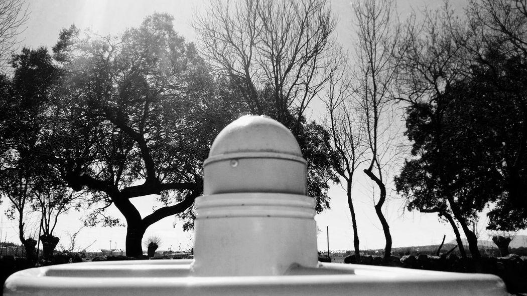 Dehesa Boyal Composition Nature Trees Black And White Villalba