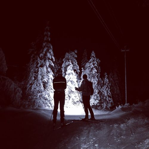 Fatherandson Trees Crosscountry Skiing Oslo, Norway Night Beauty In Nature Shades Of Winter
