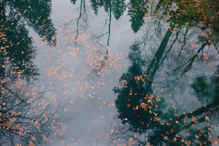 Tree Water Reflection Outdoors High Angle View Floating On Water Leaves Plant Part Lake Day Sky Branch