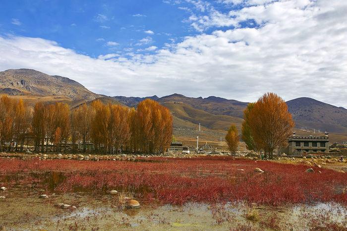 稻城   红草地 sichuan, china Autumn Beauty In Nature China Cloud Grass Landscape Landscapes With WhiteWall Mountain Nature Red Grass Scenics Sichuan Travel Trees