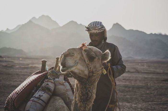 Animal Photography Beduines Camel Desert Deserts Around The World Eye4photography  Focus On Foreground Landscape Lifestyles Mountain Mountain Range Nature Outdoor Photography Outdoors Travel Destinations People And Places An Eye For Travel