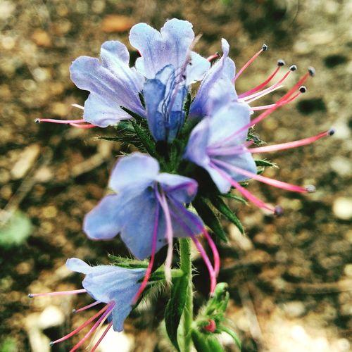 EyeEm Nature Lover Flowers Jahreszeiten Sommerzeit Blüte Nahaufnahme Wunder Inmeinemgarten Natur Beauty Redefined