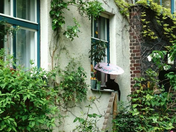 Architecture Built Structure Building Exterior House Growth Day Plant Outdoors Window Residential Building Cleaning Tree No People Cleaning Equipment Nature Cat Cats Laidback Erholung Summertime Comfort Comfortable Life Pet Portraits