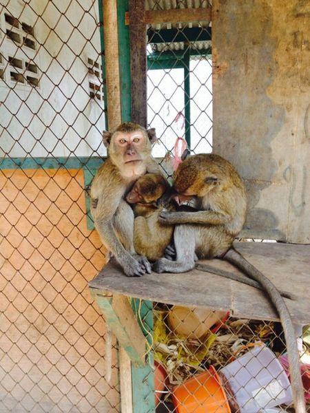 Monkeys Thailand Christmas 2013 IPhoneography