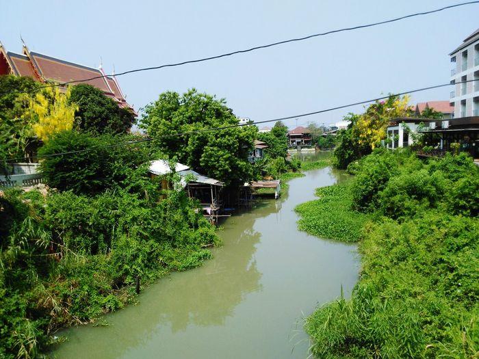 Tree Sky Water Nature Tailandia Thai Tailandia. Ayutthaya Riverside Lillypads Green Color
