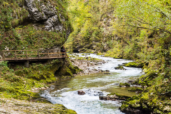 Water Rock Solid Tree Rock - Object Forest Scenics - Nature Nature Beauty In Nature River Land Plant No People Motion Flowing Water Day Environment Flowing Travel Destinations Stream - Flowing Water Outdoors Power In Nature Vintgar Gorge