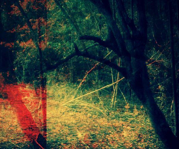 trees Hourglasse