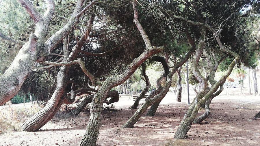 🌳🌳Pineta Arrivatafinalmente Passeggiando Scialo Strangetrees Sun Relaxing Time Buongiorno Nature Zanzareovunque
