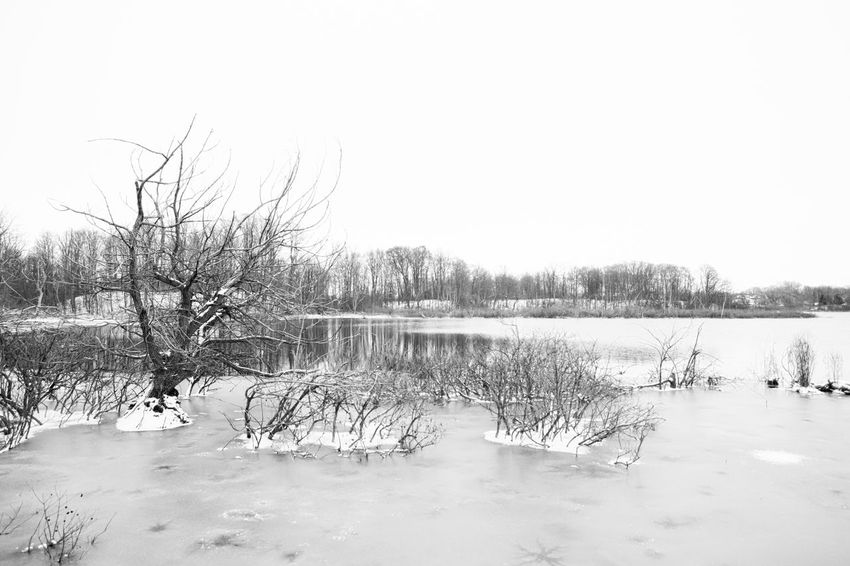 Winter has come. Westminster Ponds after the first substantial snow fall of the year in London, Ontario. 24mm Bare Tree Beauty In Nature Bleak Canon Cold Cold Temperature Frozen Full Frame Ice Lake Landscape Minimalism Nature No People Outdoors Remote Snow Tranquil Scene Tranquility Tree Water Wideangle Winter