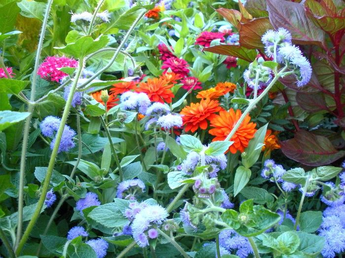 Flowers Beauty Floral UW Madison Pollen Green Lush Foliage Colour Of Life
