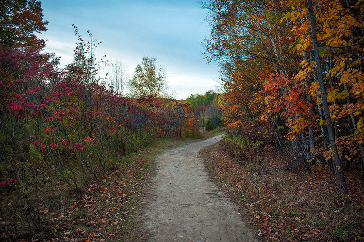 Fall Path Fall Enjoying Life Canada Ontario Discover  Toronto JackNobre October Colors Natural