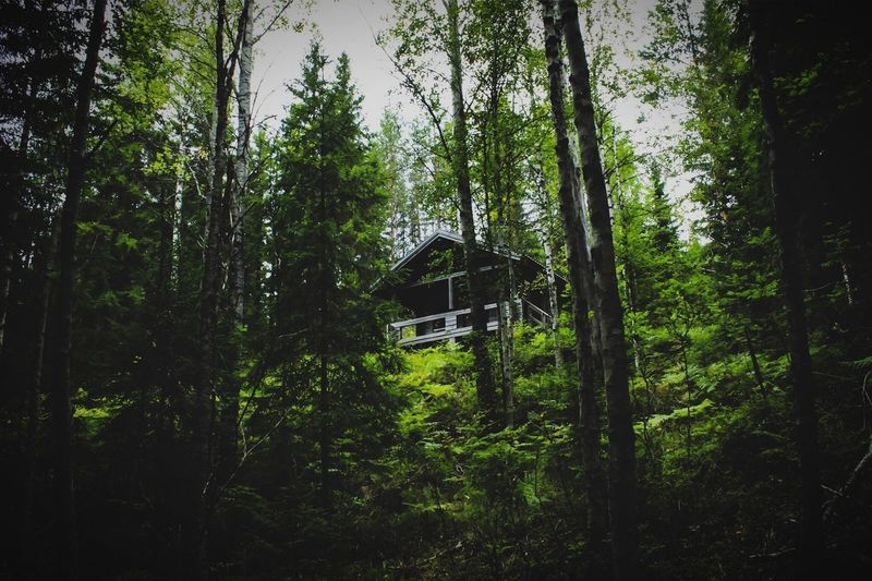 Tree Forest Growth Nature Built Structure No People Architecture Tranquility Day Lush Foliage Beauty In Nature Tranquil Scene Green Color Outdoors Building Exterior Scenics Cabin In The Woods Cabin Finland Canon