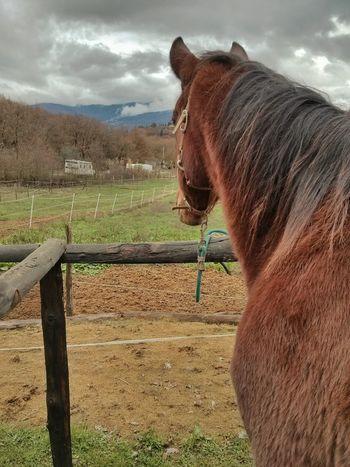 VSCO Horse Landscape