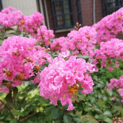 Flower Pink Color Plant No People Day Outdoors Nature Fragility Growth Beauty In Nature Close-up Flower Head Freshness Summer Sunshine Sunlight