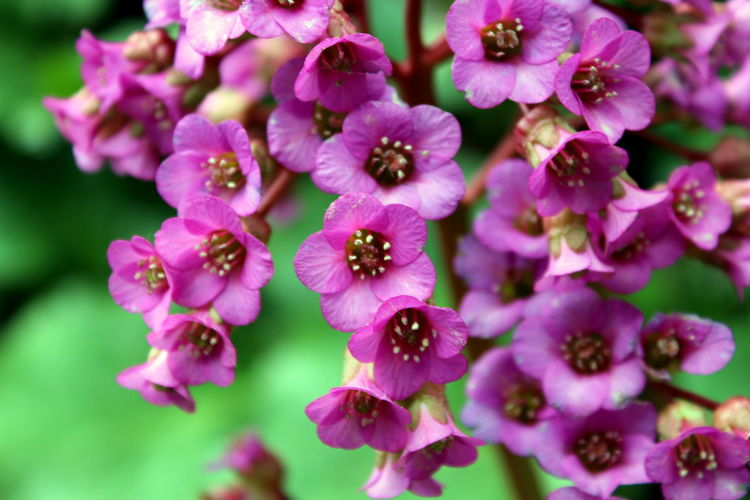 Flower Purple Plant Pink Color Nature Beauty In Nature Close-up Outdoors Flower Head