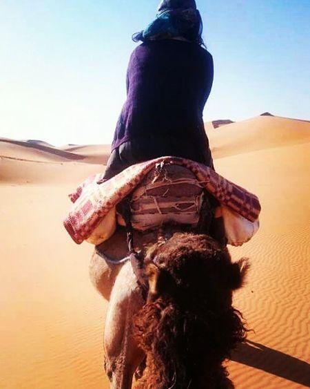 Erg Chebbi Sahara Desert Merzouga Dunes Camel Trekking Berbersoultravels Beautiful Scenery Wanderlust Morocco 🇲🇦 Love❤