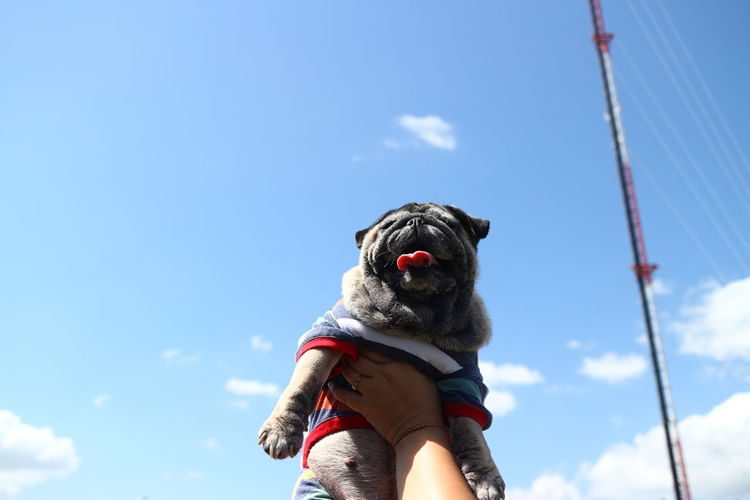 Low angle view of dog against blue sky