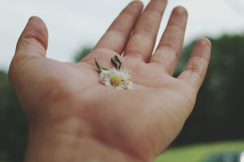 Flower Flores Hand Enjoying Life Thoughts