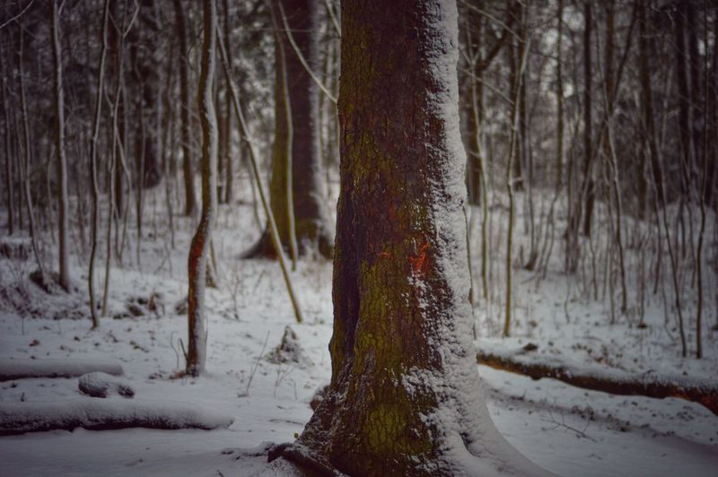 Close-up of bare tree in winter forest