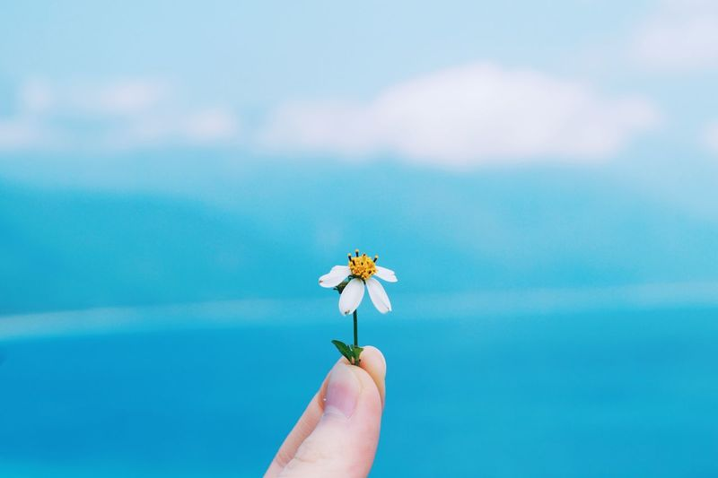 Cropped image of hand holding flower against blue sky
