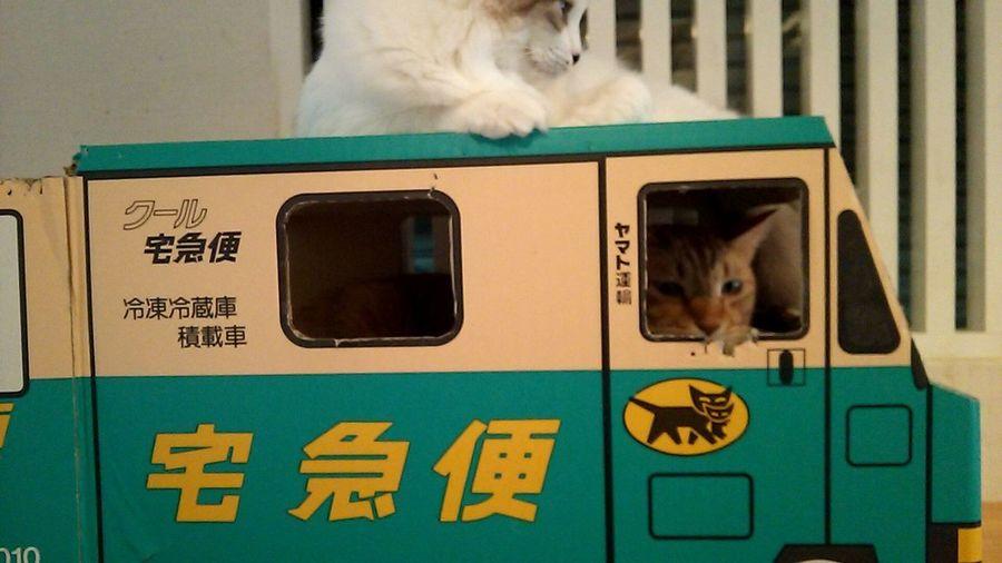 Cat Catcaffe