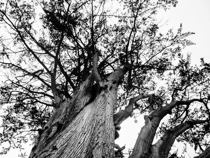 Beauty In Nature Black & White Black And White Branch Clear Sky Curraghchase Day Growth Low Angle View Nature No People Outdoors Scenics Sky Tranquility Tree Tree Trunk