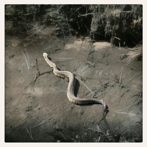 Snakes Wildlife And Nature My Country Life Check This Out