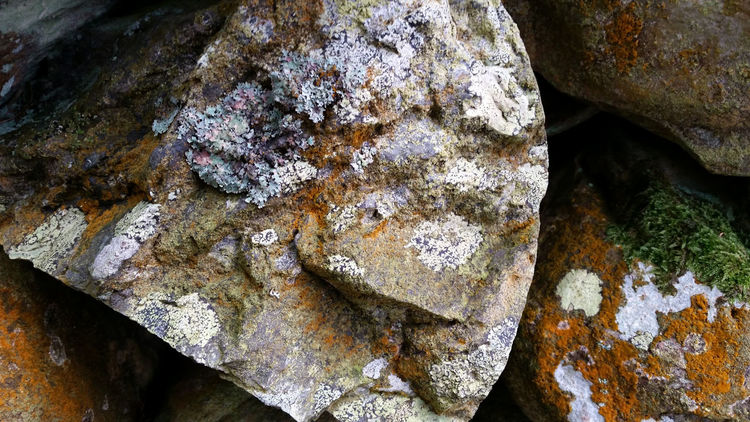 Rocks And Mold Wet Rocks Colourful Nature Outside Photography Nature Photography Naturelovers Beautiful Nature Nature Nature_collection Natural Beauty Stone Rocks North Wales Close Up Nature Moss Mold Water Showcase: February The Great Outdoors With Adobe