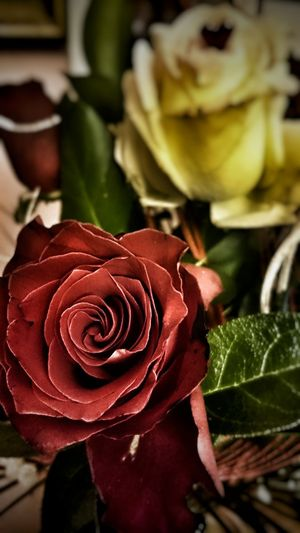 Rose, rose, rose..🌹 ☺