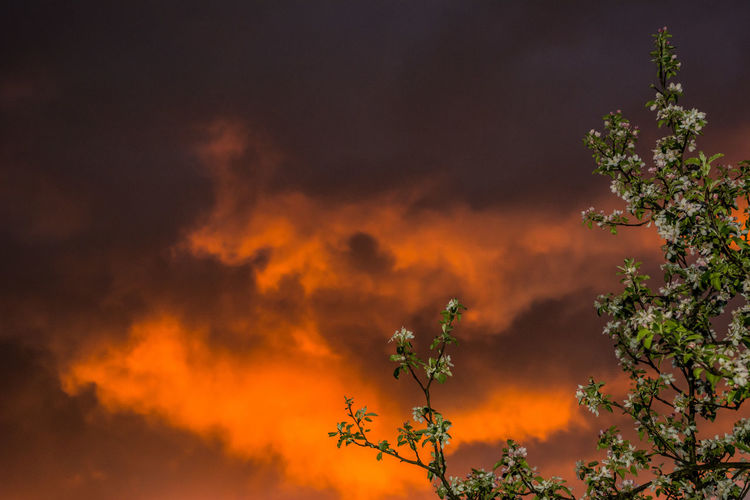 Low angle view of trees against orange sky
