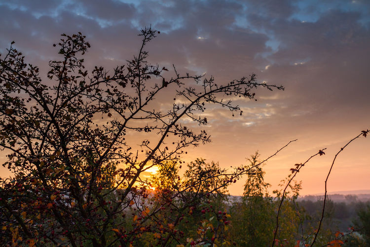 Autumn sunrise Branches Cloud Cloudscape Morning Light Sunrise Silhouette Beauty In Nature Branches And Sky Cloud - Sky Clouds And Sky Colorful Day Growth Nature Outdoors Plant Scenics Silhouette Sky Sunrise Sunset Sunup Tranquil Scene Tranquility Tree