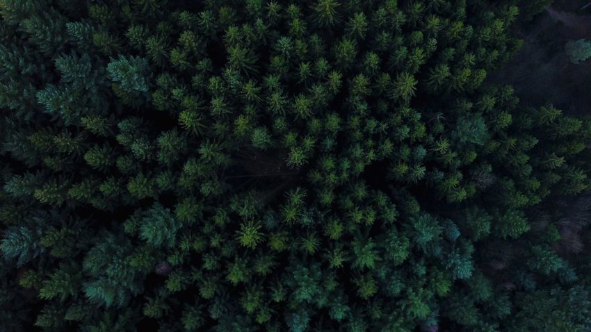 Drone  Dji Mavic Dronephotography Droneshot Drones Nature No People Beauty In Nature Tree Forest Nature Growth Lush Foliage Green Color Backgrounds Full Frame Tranquility Day Outdoors