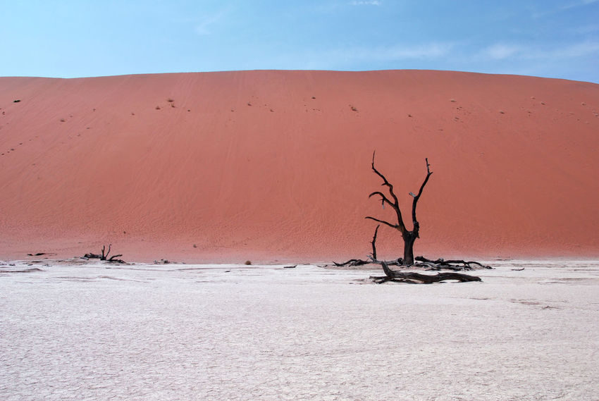Dead Tree Deadvlei Desert Deserts Around The World Namib Desert Namibia Namibia Landscape NamibiaPhotography Sossusvlei Africa African Beauty Arid Climate Bare Tree Dead Tree Desert Dried Dried Plant Nature Colors Red Color Red Desert Red Sand Sand Dune Sand Dunes Tree