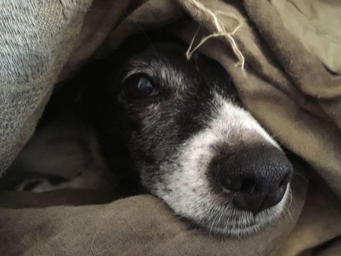Snuggle EyeEm