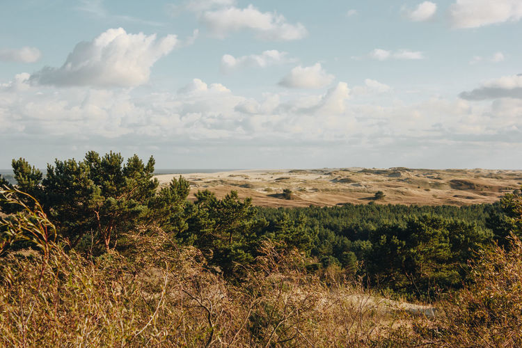 Curonian Spit Lietuva Lithuania Beauty In Nature Cloud - Sky Day Environment Field Growth Horizon Idyllic Land Landscape Nature Nida No People Non-urban Scene Outdoors Plant Scenics - Nature Sky Tranquil Scene Tranquility Tree