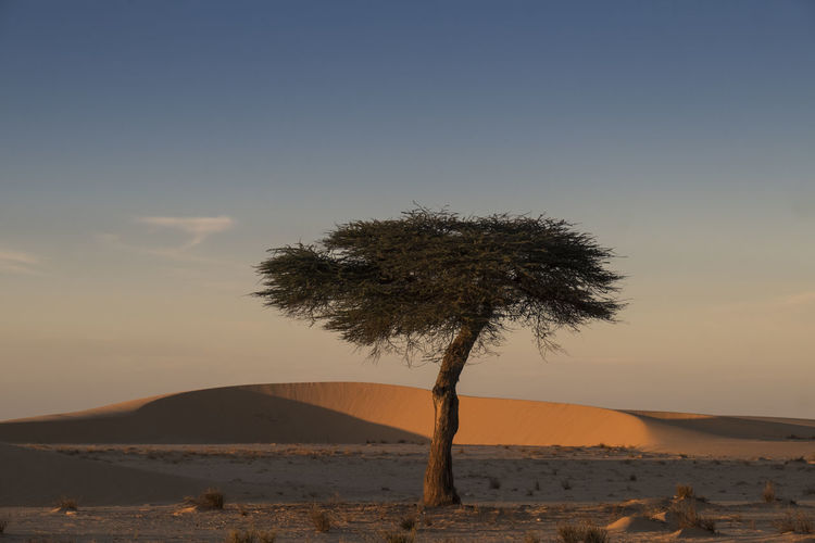 Tree On Desert Against Sky During Sunset