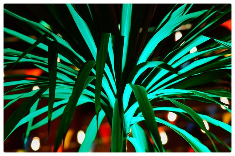 Jacklycat©2018 Street Light Thank You My Friends 😊 The Creative - 2018 EyeEm Awards The Great Outdoors - 2018 EyeEm Awards The Still Life Photographer - 2018 EyeEm Awards The Street Photographer - 2018 EyeEm Awards Auto Post Production Filter Getting Inspired Nature Palm Leaf Street Photography Streetphotography Transfer Print