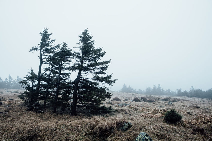 Beauty In Nature Climate Coniferous Tree Day Environment Field Fog Germany Growth Harz Harzmountains Land Landscape Nature No People Non-urban Scene Outdoors Pine Tree Plant Scenics - Nature Sky Tranquil Scene Tranquility Tree
