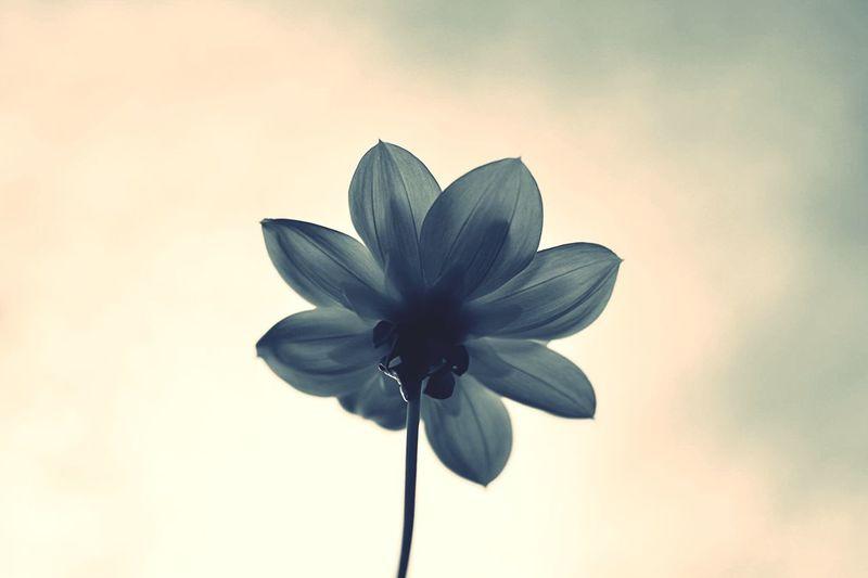 Art Wild White Black Sky Daria Single One Flower