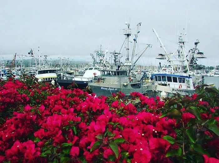 The harbor is perfect 😍 Visitventura Downtownventura Venturaharbor Photography California