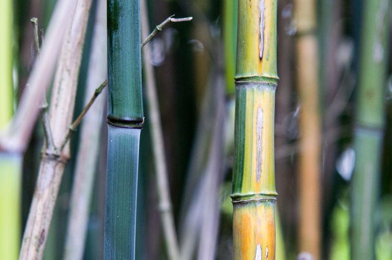 Close-up of bamboo outdoors
