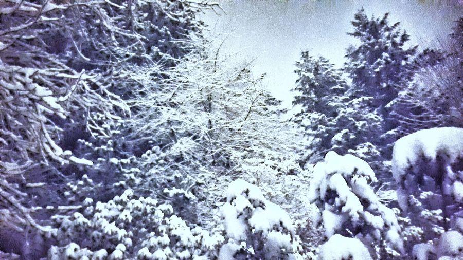 Snow Day! A few
