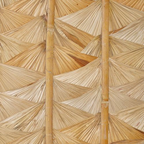 Low angle view of dried palm leaf