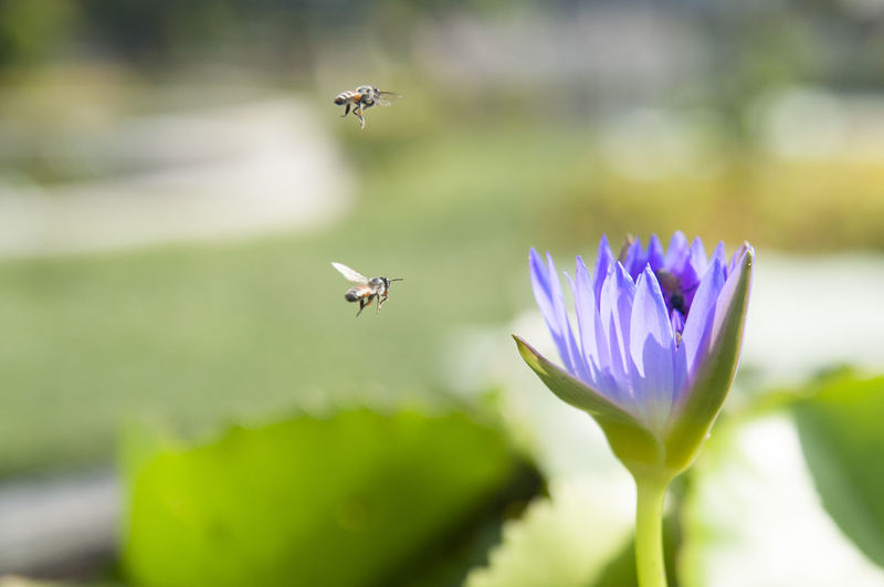 Close-up of bees hovering