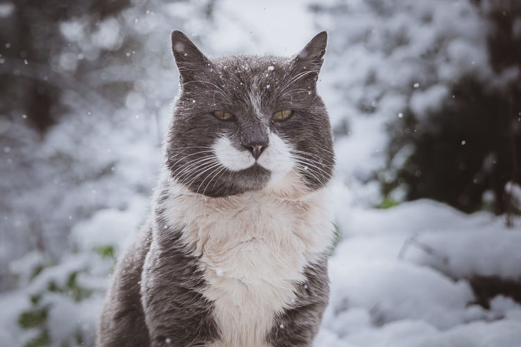 Cat on snow during winter